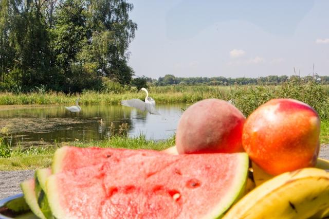 Svačina v ptačí rezervaci v Polsku